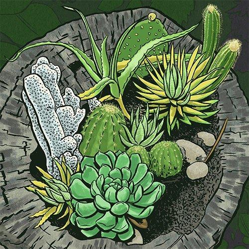Catctus Garden