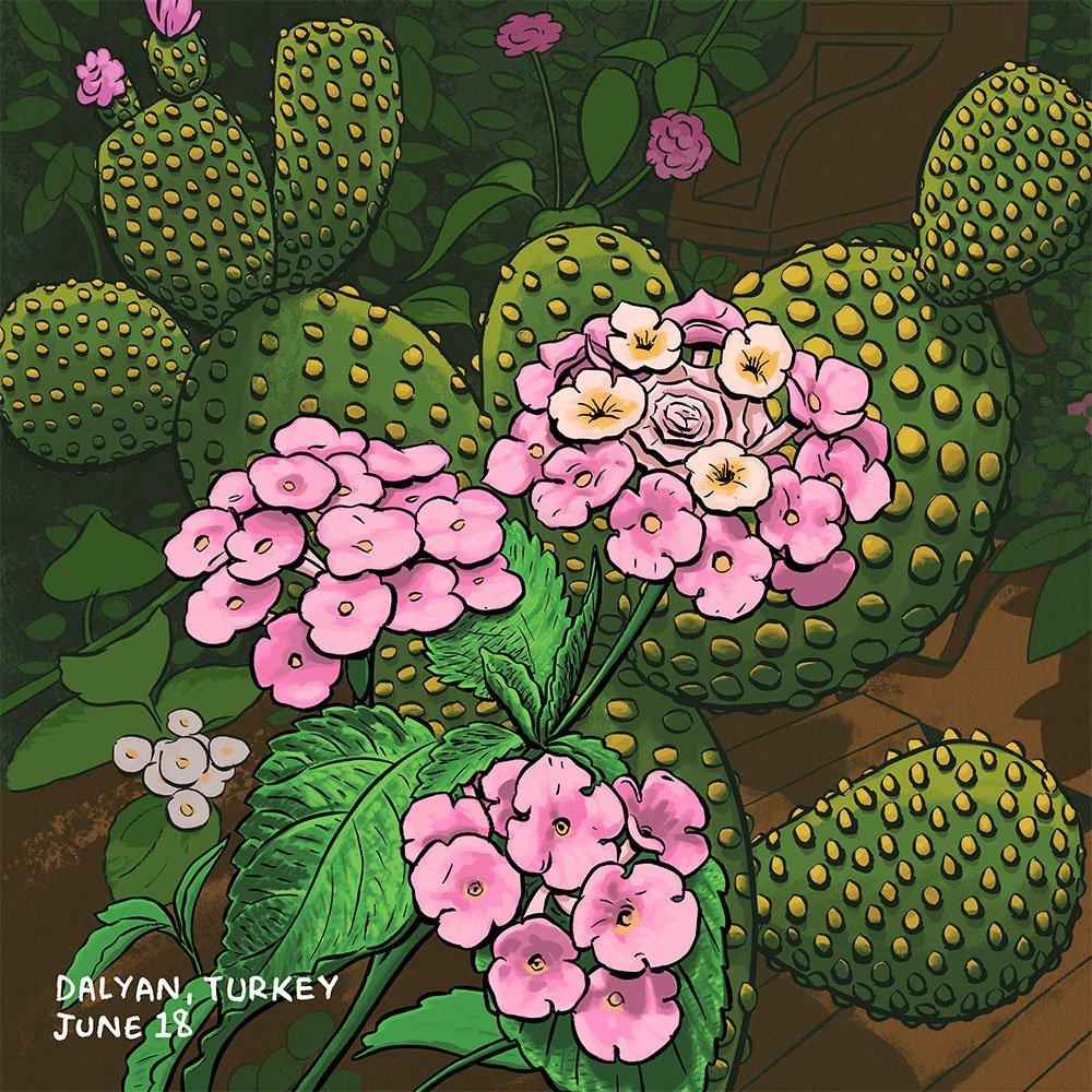 Cactus_2_1000
