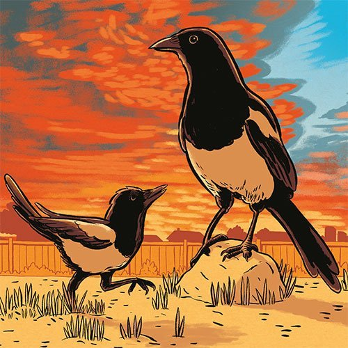 Magpie Mother & Son